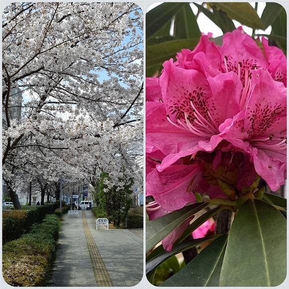 春のお便り_e0307335_17315273.jpg