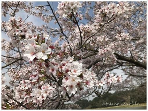 【募集】4月 アロマレッスンのお誘い_a0310054_10551151.jpg