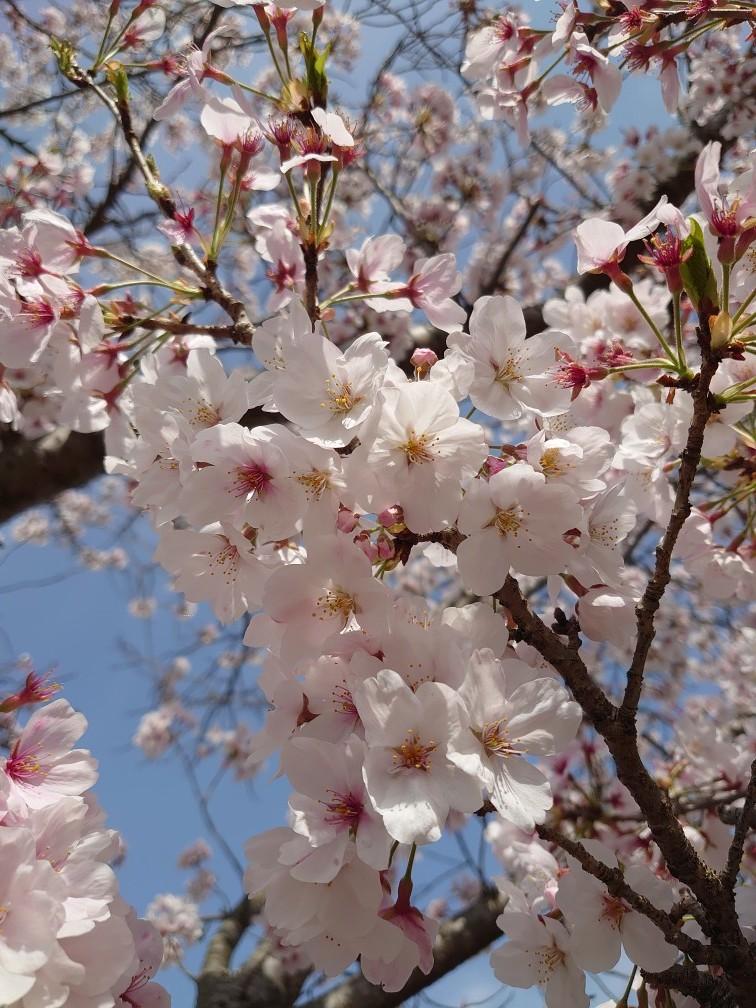 4月1日_e0183255_15433336.jpg