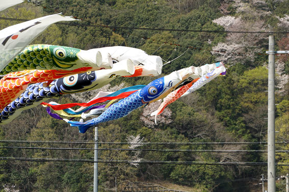歓迎垂れ幕と鯉のぼり_b0145257_15334649.jpg