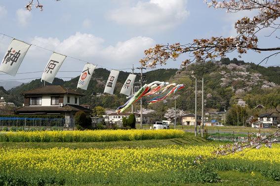 歓迎垂れ幕と鯉のぼり_b0145257_15334908.jpg