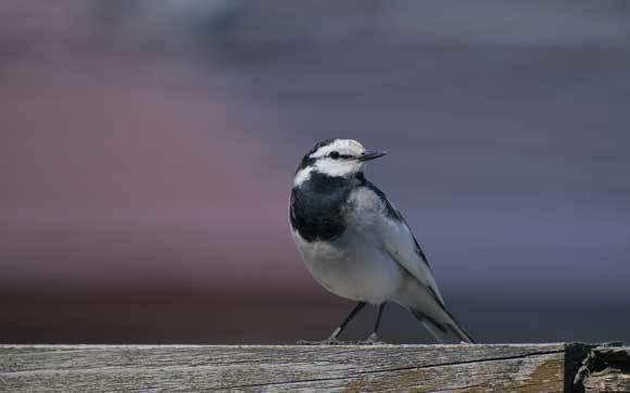 我が家への訪問鳥_e0220159_12130698.jpg