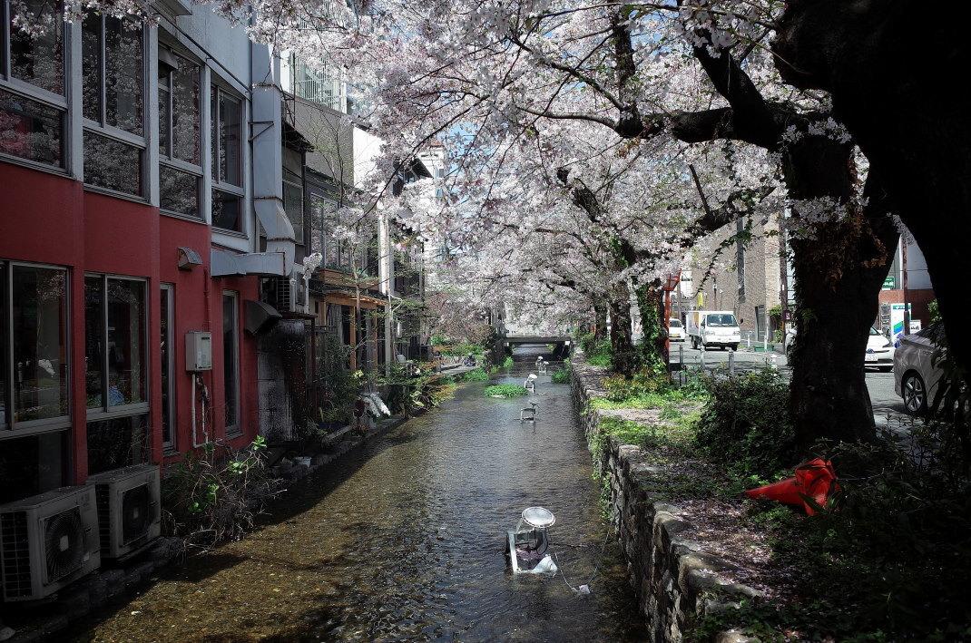木屋町の桜_d0090161_09440735.jpg