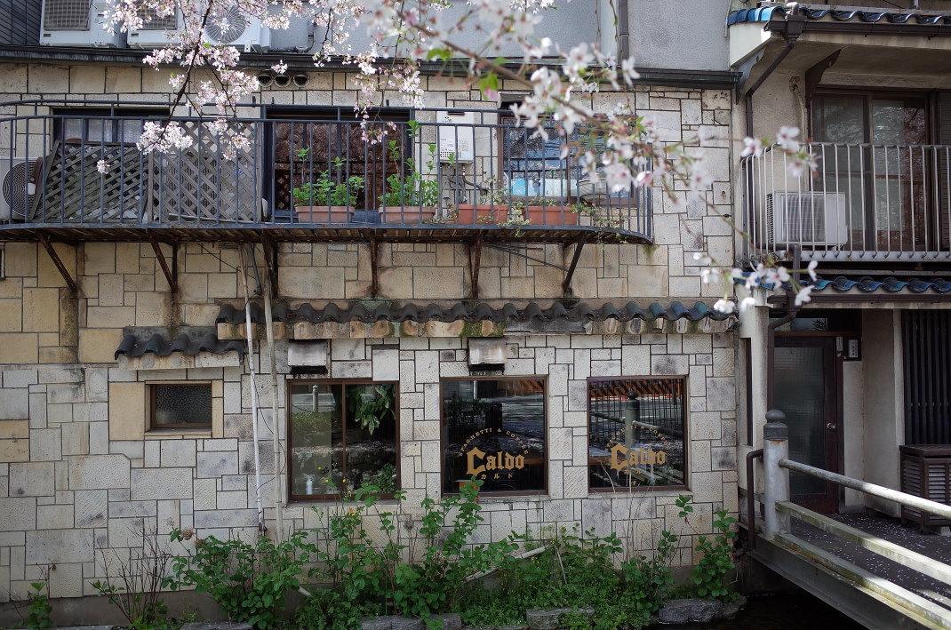 木屋町の桜_d0090161_09443131.jpg