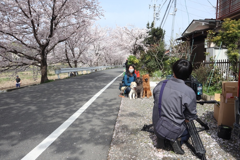 2021・桜 〜鴨川_a0119263_17050532.jpg