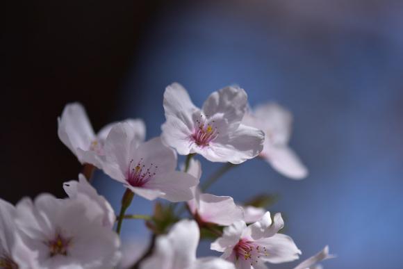 2021年 春_e0164563_09142389.jpg