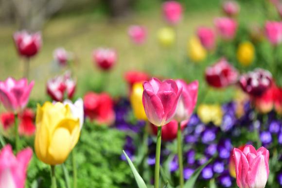 2021年 春_e0164563_09143948.jpg