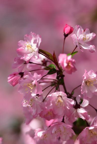 2021年 春_e0164563_09170584.jpg