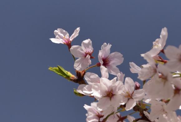 2021年 春_e0164563_09173447.jpg