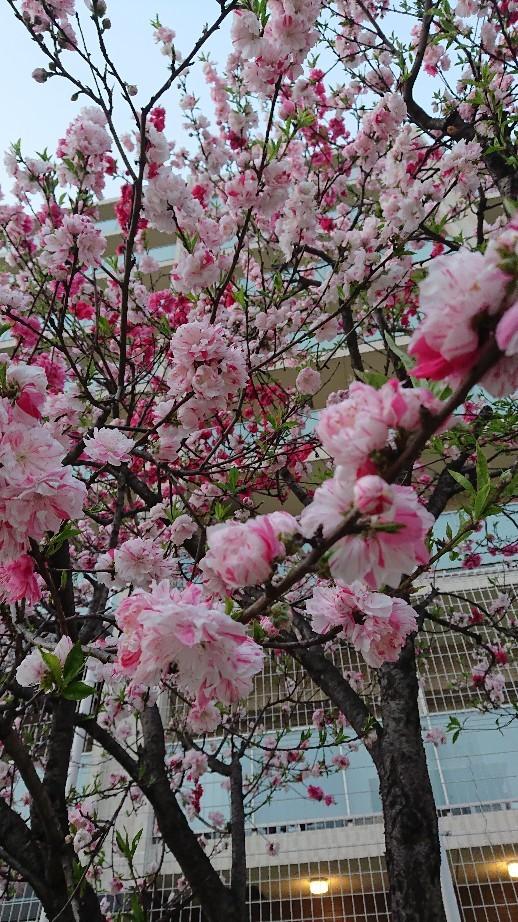 4月の定休日と営業時..._f0187266_12385871.jpg