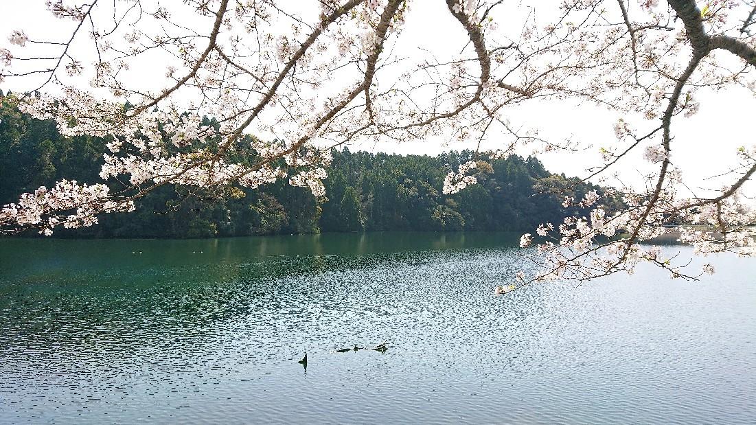 桜のように***_e0290872_18241007.jpg