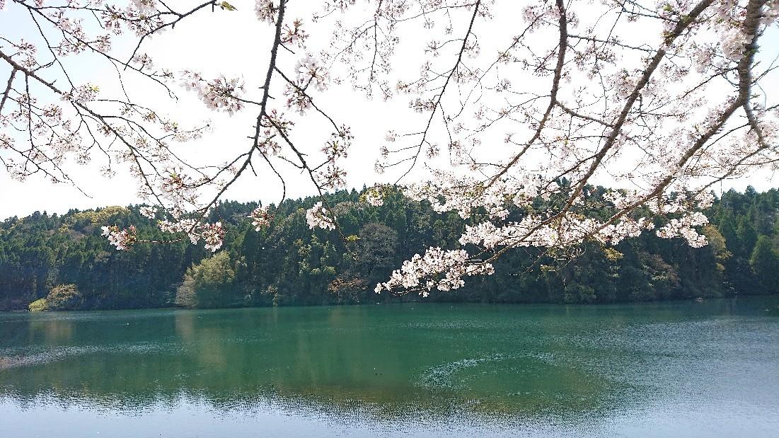 桜のように***_e0290872_18244239.jpg