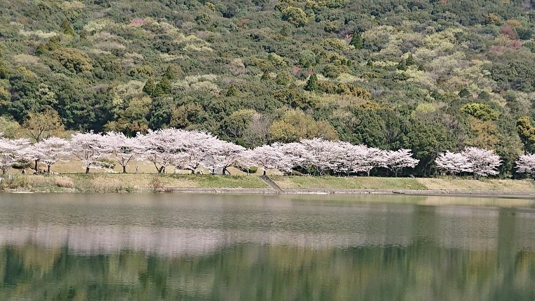 桜のように***_e0290872_18245892.jpg