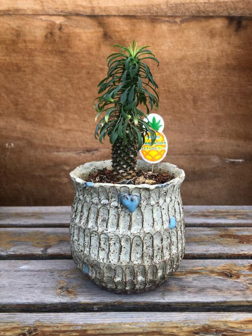 植木鉢講座のお知らせのお知らせ_c0298879_16392142.jpg