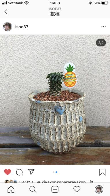 植木鉢講座のお知らせのお知らせ_c0298879_16392563.jpg
