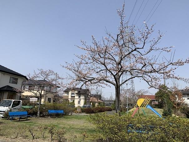 町内でも桜が咲きました_d0261484_08460229.jpg