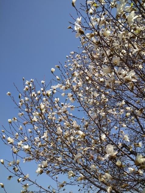 春爛漫✿_f0147585_19150646.jpg