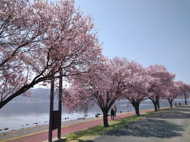 春爛漫✿_f0147585_19154032.jpg