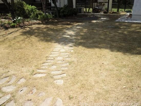 満開の桜と、芝生・TM9のメンテナンスの完了_c0293787_19583966.jpg