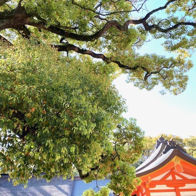 今日から新年度♪_f0232994_15323277.jpg