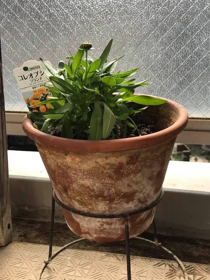 ベランダの花を飾ってみました。_c0186612_11305638.jpg