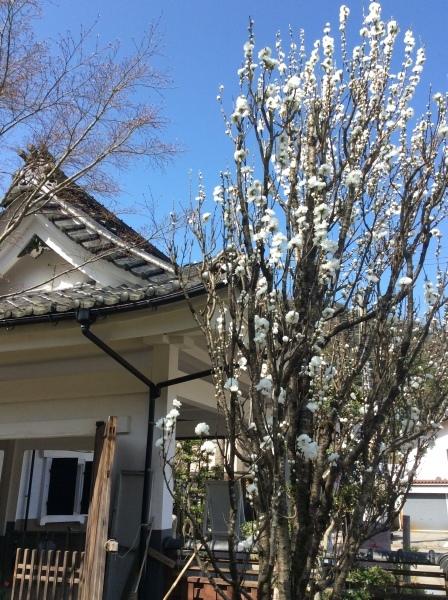 「芭蕉の館」の春①_f0289632_07061195.jpg