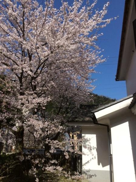 「芭蕉の館」の春②_f0289632_07091190.jpg