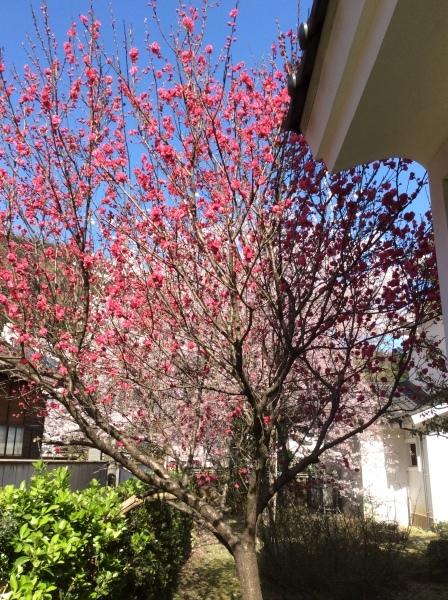 「芭蕉の館」の春②_f0289632_07103798.jpg
