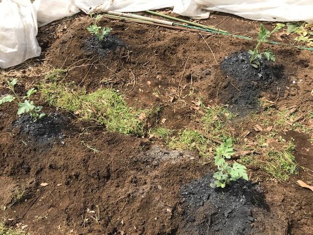 小玉スイカの苗と種生姜を植え付け4・1_c0014967_06571095.jpg