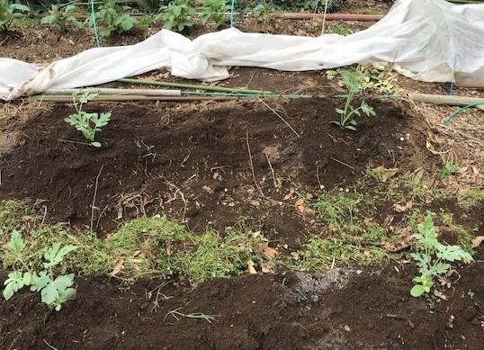 小玉スイカの苗と種生姜を植え付け4・1_c0014967_06580602.jpg