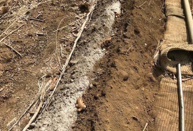 小玉スイカの苗と種生姜を植え付け4・1_c0014967_07004469.jpg
