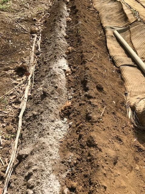 小玉スイカの苗と種生姜を植え付け4・1_c0014967_07005406.jpg