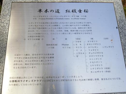 桜 第2弾_f0226671_10034931.jpg