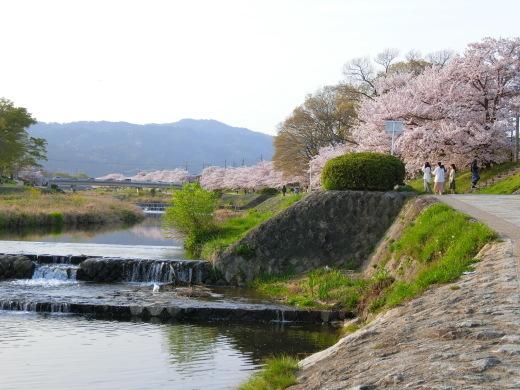 桜 第2弾_f0226671_10164109.jpg