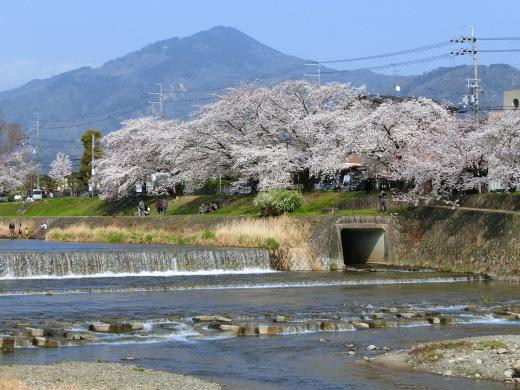 桜 第2弾_f0226671_10174585.jpg