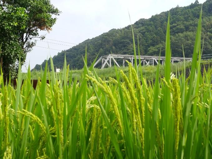 山口線匹見川橋梁_f0116479_14241363.jpg