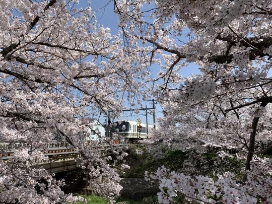 佐保川の桜_f0266284_11242965.jpeg