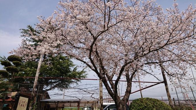 「春のミーティング」_d0230486_22575676.jpg