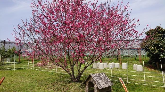 「春のミーティング」_d0230486_22580352.jpg