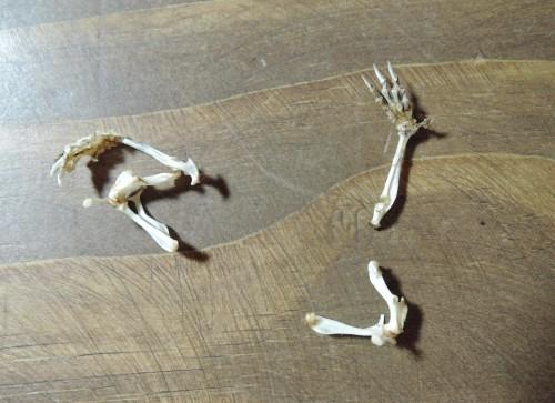 挑戦!トガリネズミ骨格標本・その3(閲覧注意)_d0154687_19505086.jpg