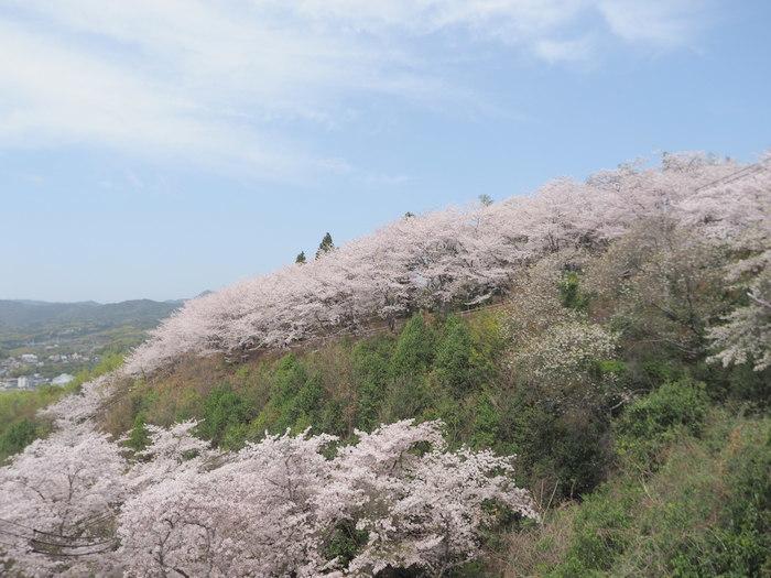 正福寺山公園の桜_c0116915_00491709.jpg