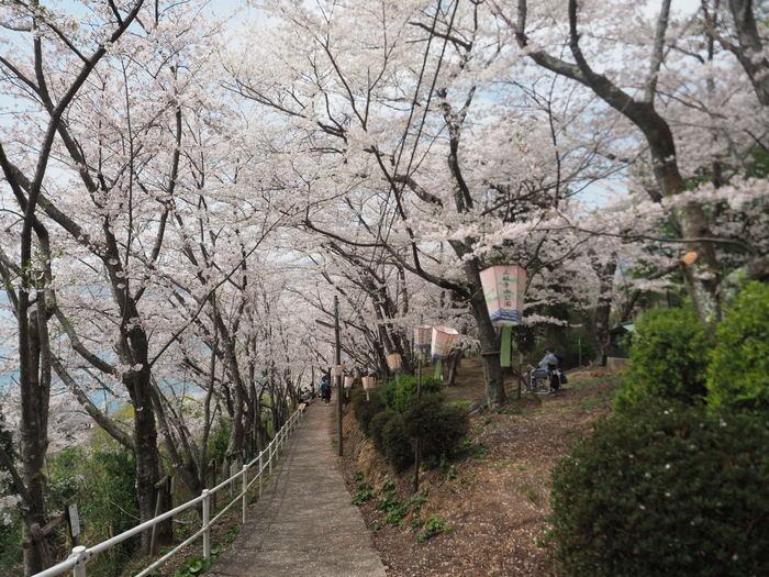 正福寺山公園の桜_c0116915_00514270.jpg