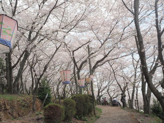正福寺山公園の桜_c0116915_00522261.jpg
