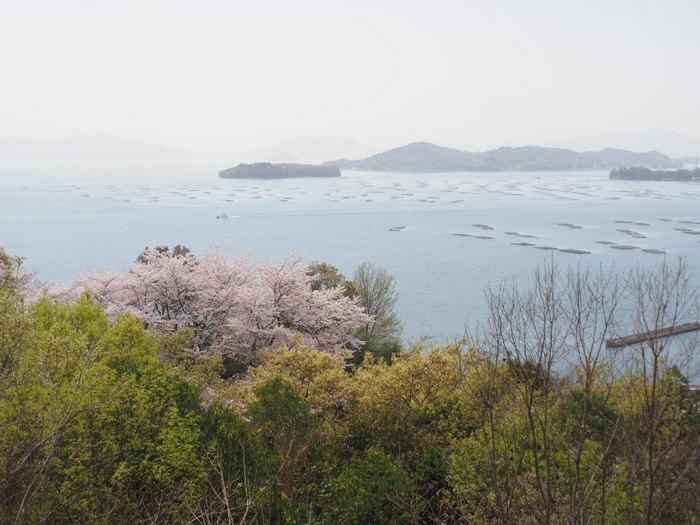正福寺山公園の桜_c0116915_00540063.jpg