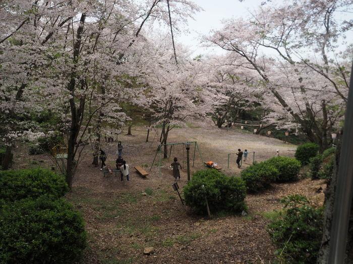 正福寺山公園の桜_c0116915_00543391.jpg