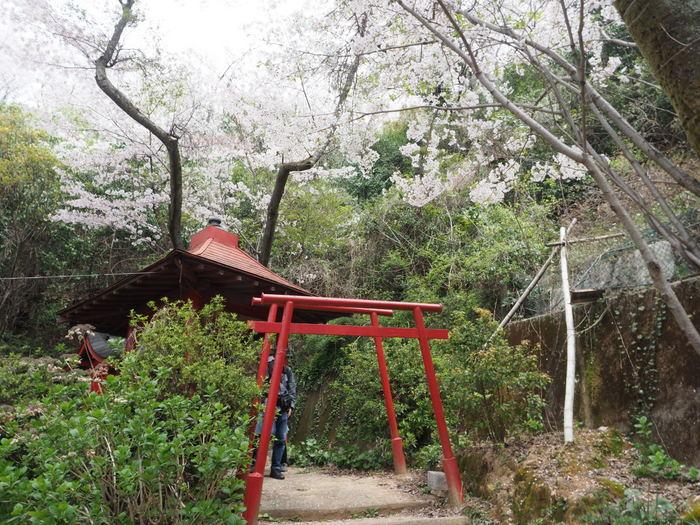正福寺山公園の桜_c0116915_00544895.jpg