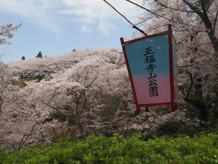正福寺山公園の桜_c0116915_00552379.jpg