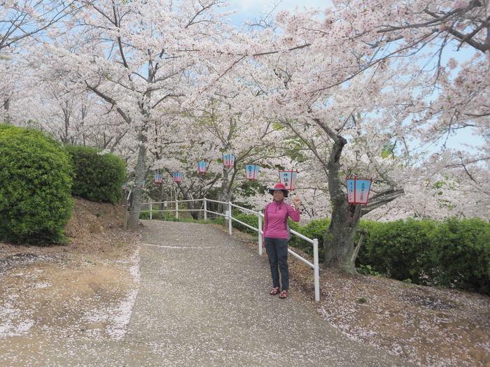 正福寺山公園の桜_c0116915_00561018.jpg