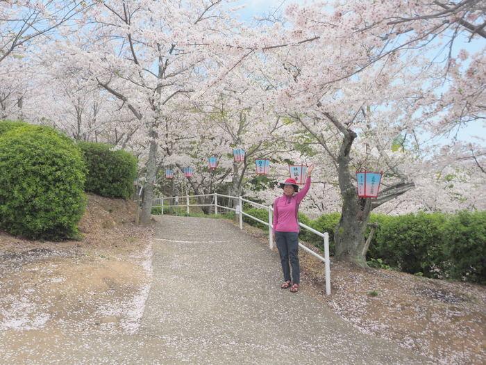 正福寺山公園の桜_c0116915_00562100.jpg