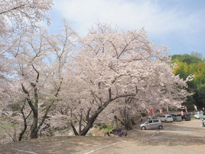 正福寺山公園の桜_c0116915_01002539.jpg